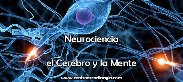 3 Neurociencia AGLA