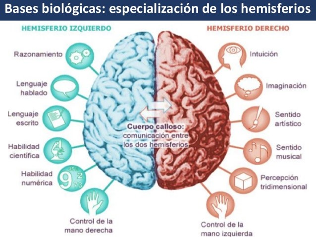 4 Neurociencia AGLA
